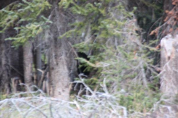 Da sass der riesige Bär direkt vor unserer Nase.