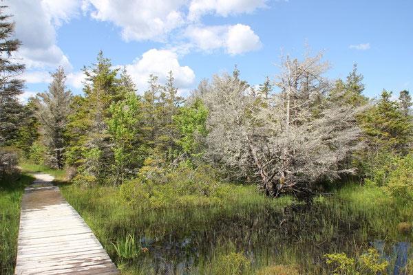 Taylor Head Provincial Park