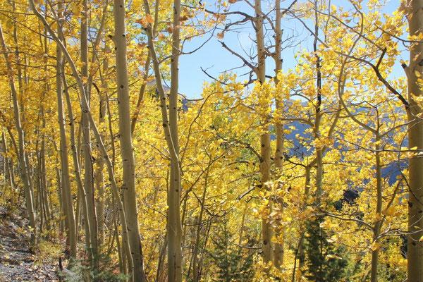 Auch hier leuchteten die Bäume in schönstem Gelb.