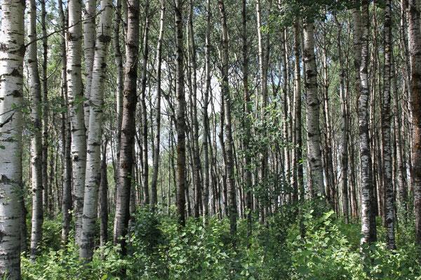 Da sieht man ja den Wald vor lauter Bäumen nicht mehr.