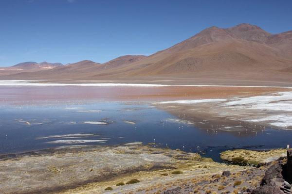 Das Wasser ist rot und es leben viele Flamingos dort.