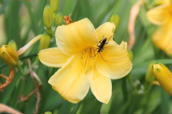 Wenn die Käfer einem nicht um den Kopf schwirren, sind sie doch total süss.