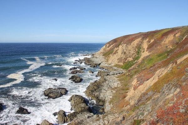 Ausflug an die Küste auf den Bodega Head