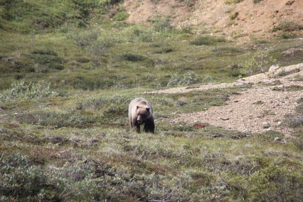 Und dann sahen wir einen Bären von ganz nahe.