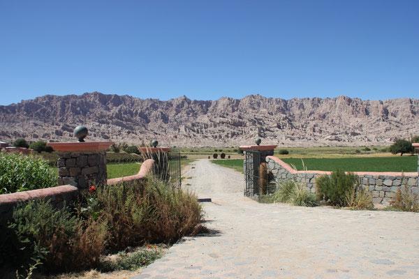 Im Weingebiet Cafayate