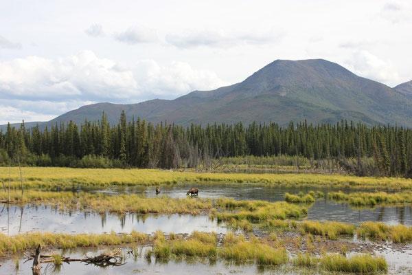 Was für ein Abschiedsgruss von Alaska.