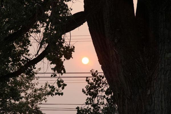Die Sonne ist auch in Cranbrook rot vom Rauch und der Asche in der Luft.
