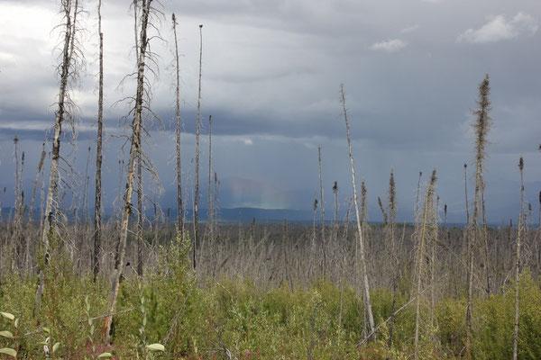 ein vertikaler Regenbogen in der Ferne
