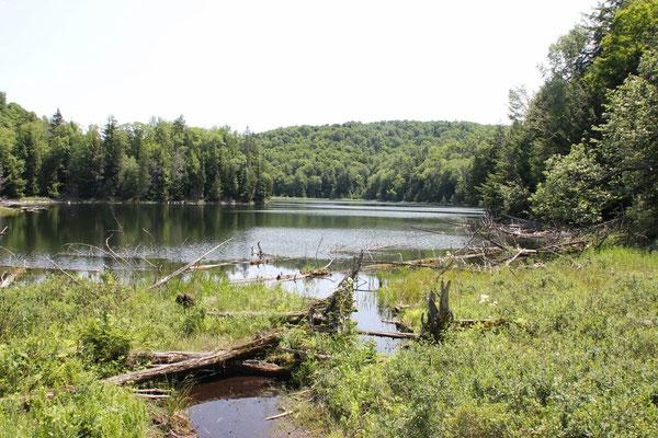Auf der Rundwanderung im Forêt La Blanche kam man an verschiedenen schönen Seen vorbei.