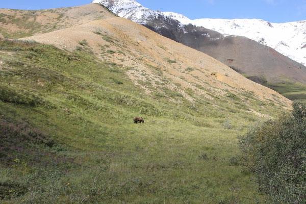 Bär und Berge, das ist Alaska!