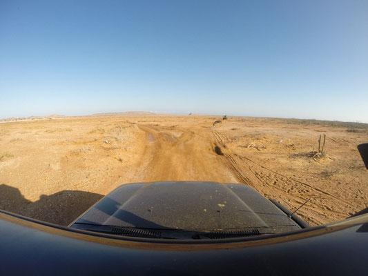 Mit einem Affenzahn durch die Wüste.