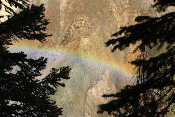 Regenbogen bei den Lower Falls.