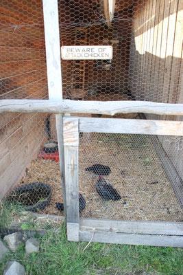 Klar, dass es hier auch Hühner gibt...