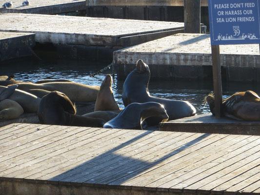 Zurück auf dem Festland am Pier 39.