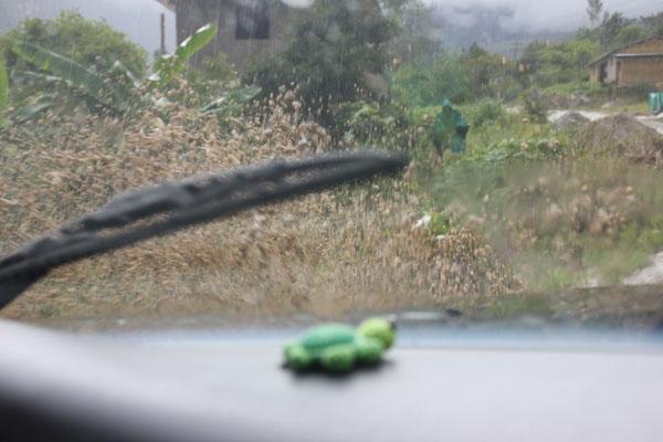 Bei dem Gespritze erschrickt sich die kleine Schildkröte...