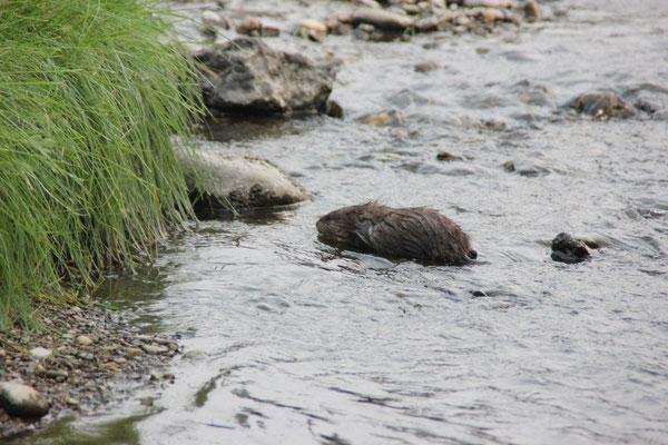 Ich wusste gar nicht, dass Otter so süss sind :)