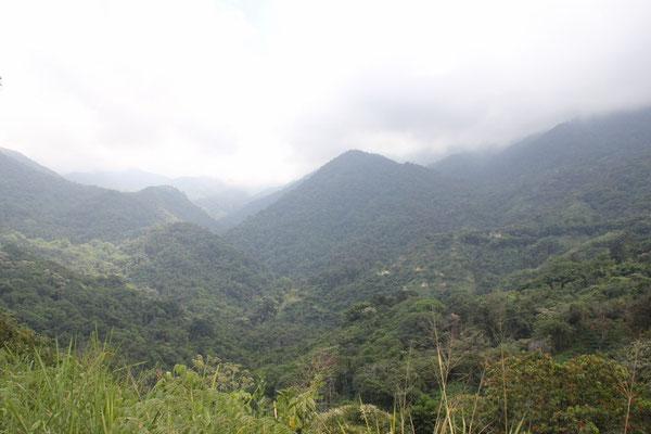 Die grüne Berglandschaft um Minca.