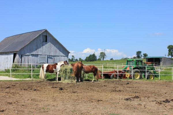 27 Pferde leben zurzeit auf der Farm