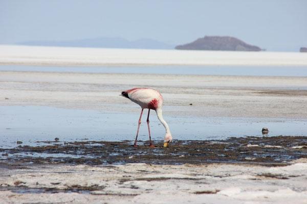 Zur Begrüssung ein paar Flamingos.