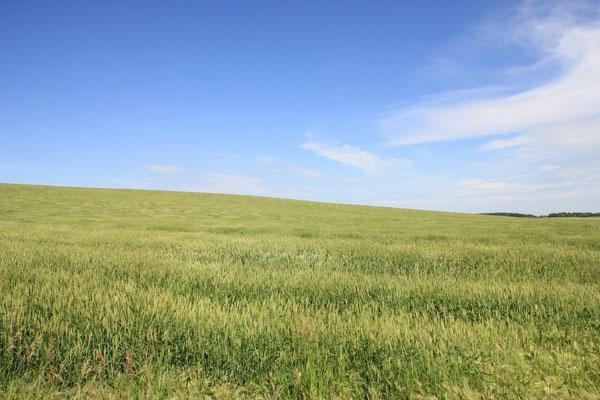 Man hört den Wind fast, der hier über die Felder weht.