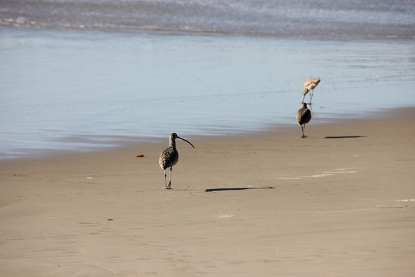 Diese lustigen Vögel trafen wir öfters an.