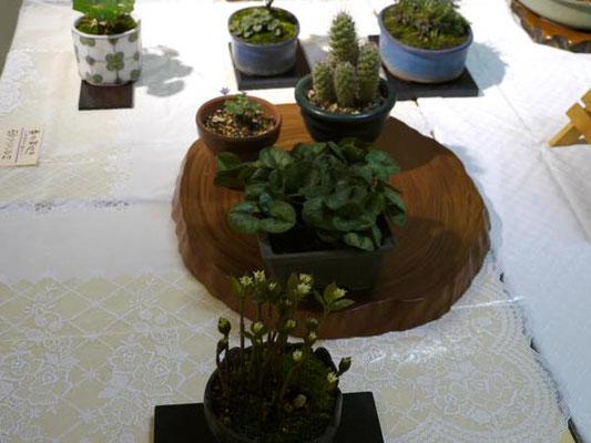 砂川ハルエ:春の芽吹き