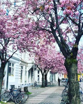 Frühling auf Sankt Pauli