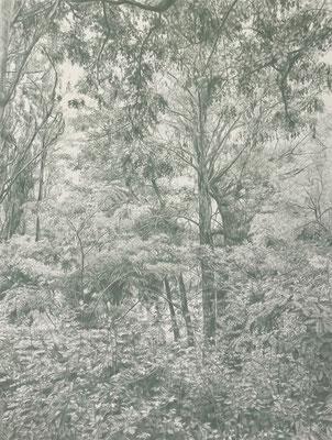 Earth green. Lápiz de color sobre papel pegado a dibond de aluminio, 65 x 50 cm.