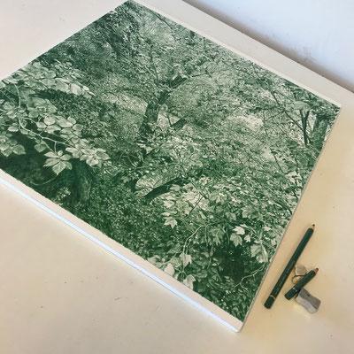 Juniper Green. Lápiz de color sobre papel pegado a dibond de aluminio. 44 x 44 cm.