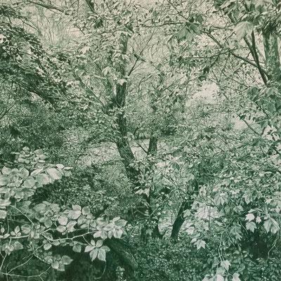 Juniper Green. Colour pencil on paper glued to aluminum dibond. 44 x 44 cm.
