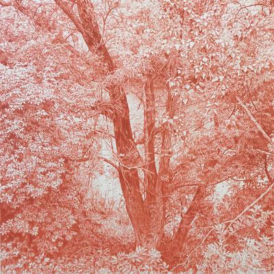Venetian Red. Colour pencil on paper glued to aluminium dibond. 44 x 44 cm.
