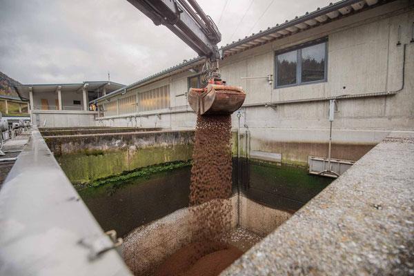 Befüllen des Beckens mit Granulat