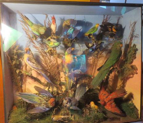 1426 diorama  16 oiseaux multicolores