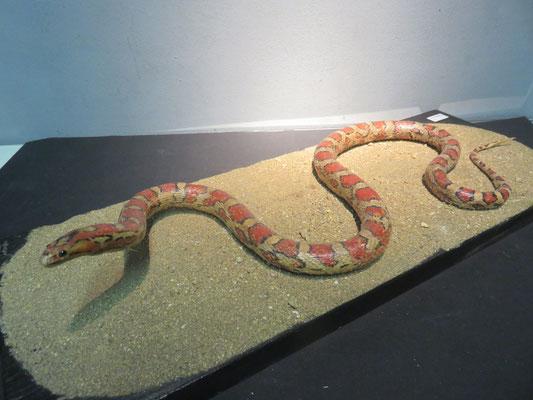 serpent des blés ref 8017