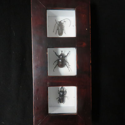 1420 trois insectes sous vitrine