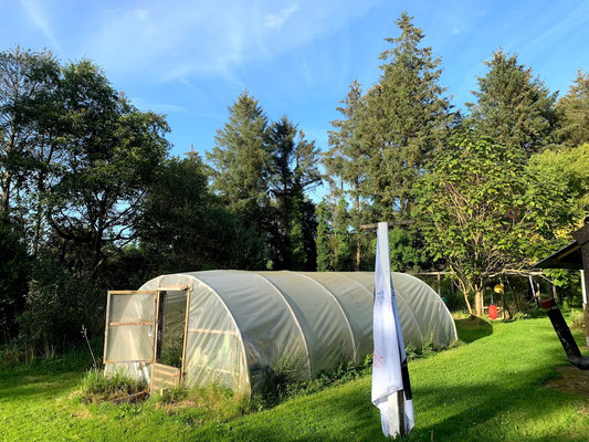 Polytunnel in the backyard
