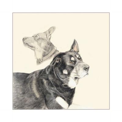 Boomer, Aquarellstift auf Papier, Christa Lippich - Tiermalerei