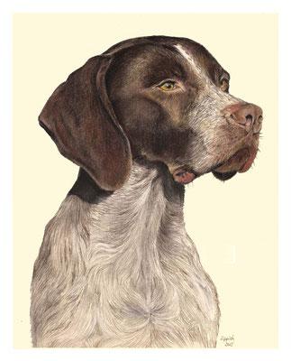 Vison, Braque Francais, Aquarellstift auf Papier, Christa Lippich - Tiermalerei