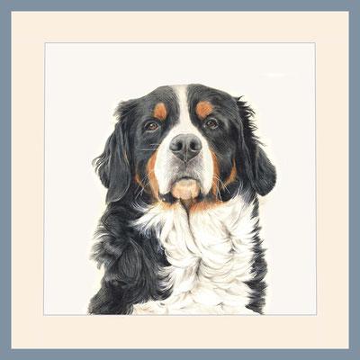 Oscar, Berner Sennenhund, Aquarellstift auf Papier, Christa Lippich - Tiermalerei