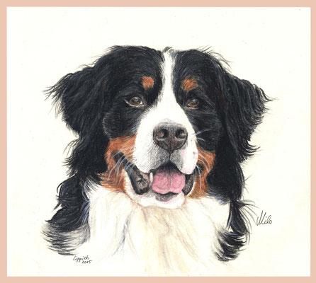Milo, Berner Sennenhund, Aquarellstift auf Papier, Christa Lippich - Tiermalerei