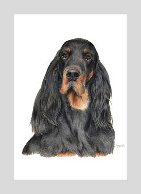 Paige, Gordon Setter, Polychromos  Künstlerstifte auf Papier, Christa Lippich - Tiermalerei