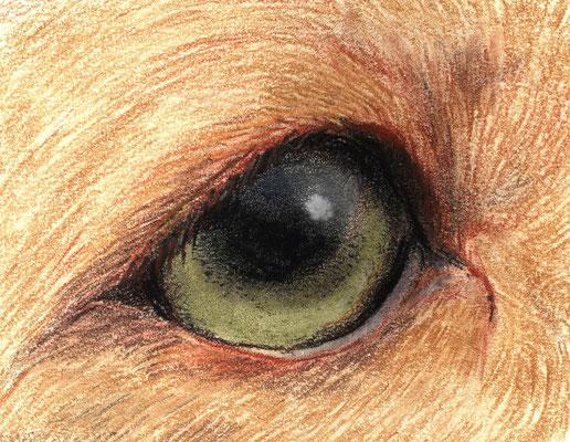 Auge, Hund, Aquarellstift auf Papier, Christa Lippich - Tiermalerei