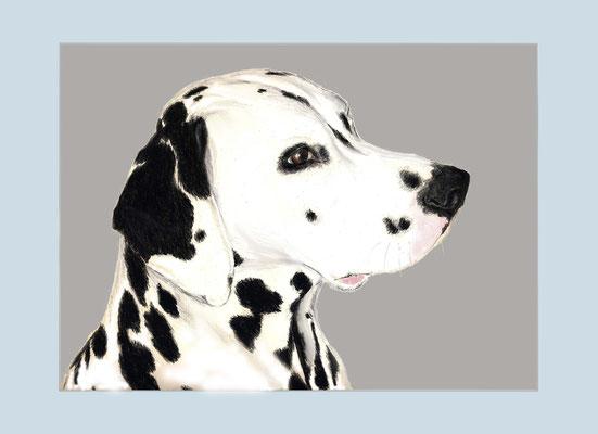 Conrad, Dalmatiner, Pastellkreide und Aquarellstift auf Papier, Christa Lippich - Tiermaleri