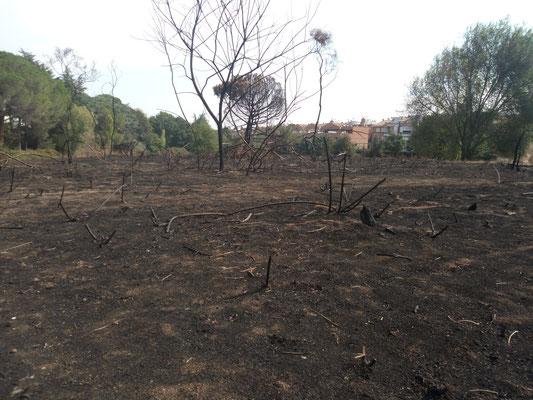 La situazione del parco dopo l'incendio del 23 agosto scorso