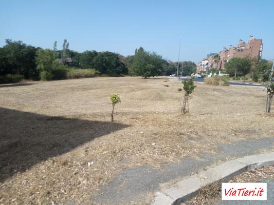 Area verde adiacente il parco in cui era scoppiato un incendio lo scorso 1 maggio