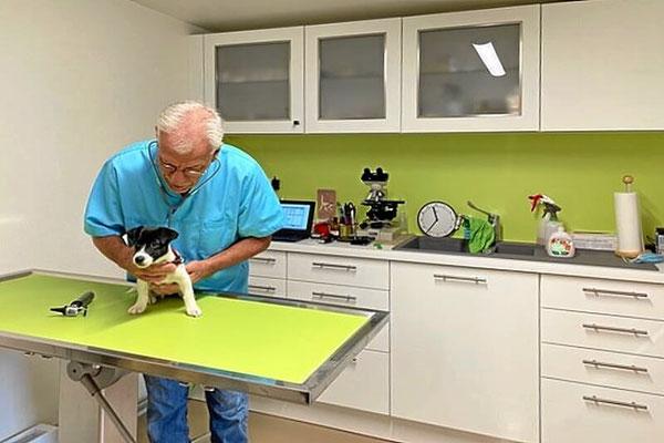 Ein Welpe wird vom Tierarzt untersucht.
