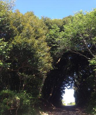 あの緑のトンネルを抜けると灯台と絶景!