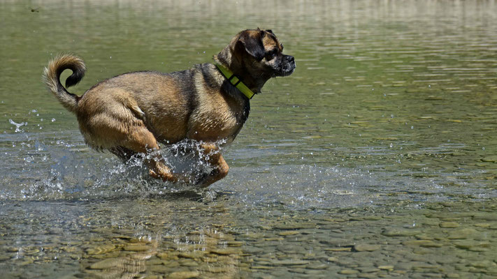 Hund, Wasser, flowfly.photo