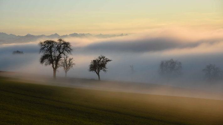 Nebel, Bäume, Abendsonne, flowfly