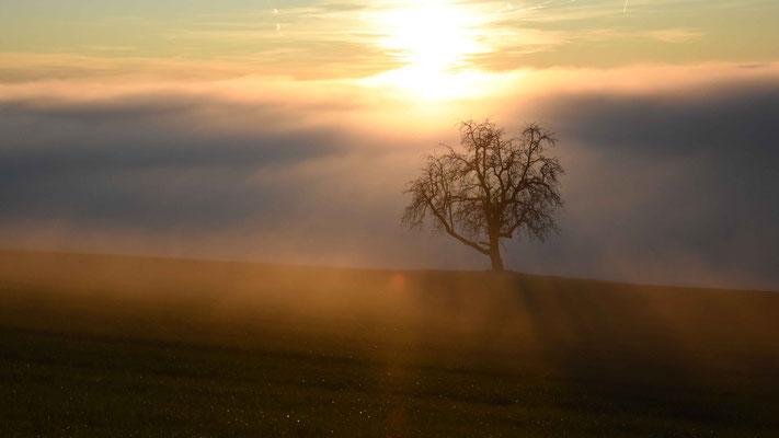 Sonnenuntergang, Nebel, Baum, flowfly